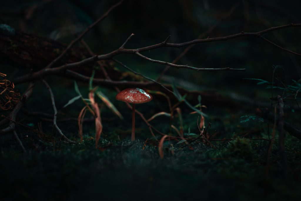 red mushroom beside grass