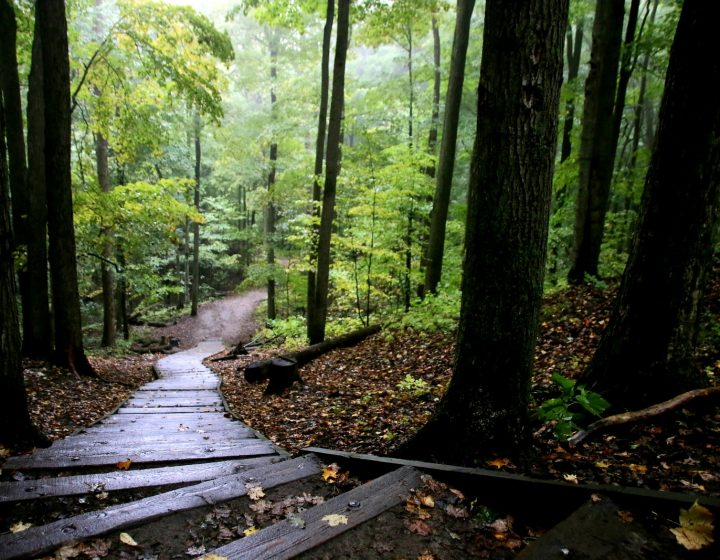 Wooden steps descending a hillside away from the viewer, heading from a dimly lit forest to lush greenery.